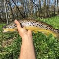 Fly Fishing at The Cowdray Estate