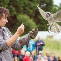 Birds of Prey North Somerset