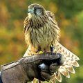 Birds of Prey Peterborough