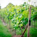 Wine Tasting Tour with Afternoon Tea for Two
